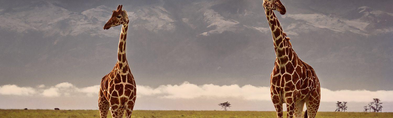 Mount Kenya © Madame Oreille